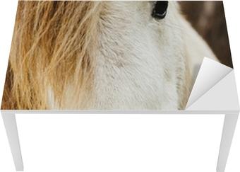 Verrassende Kinderkamer Paarden : Fotobehang wit paard u2022 pixers® we leven om te veranderen