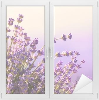 Cam ve Pencere Çıkartması Lavanta çiçekleri yaz saati çiçek
