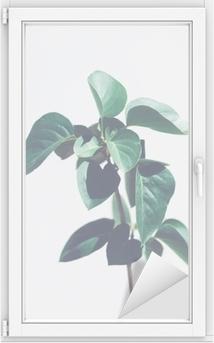 Cam ve Pencere Çıkartması Yeşil bitki yaprakları açık gri renkli izole. havalı tonlar. kopya alanı