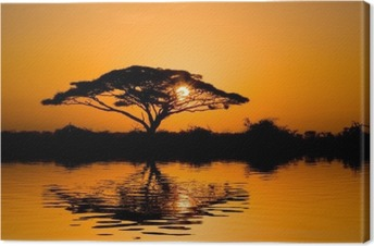 Canvas Acacia boom bij zonsopgang
