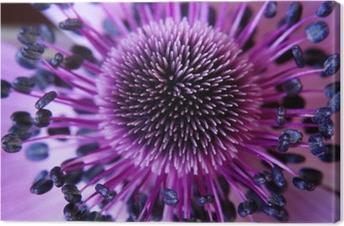 Canvas Anamone bloem
