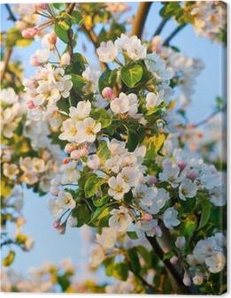 Canvas Appelboom bloesem