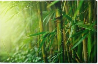 Canvas Bamboo