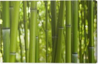 Canvas Bambus Bamboo 06