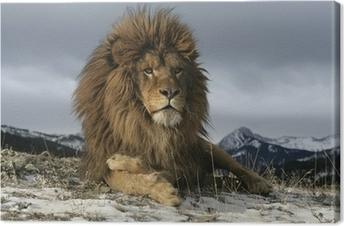 Canvas Barbarijse leeuw, Panthera leo leo
