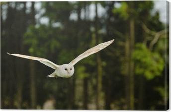 Canvas Barn Owl Flying