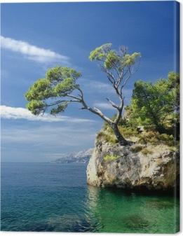 Canvas Beroemde mooie rots met pijnbomen in Brela in Kroatië