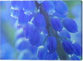 Canvas Blauwe parel hyacint