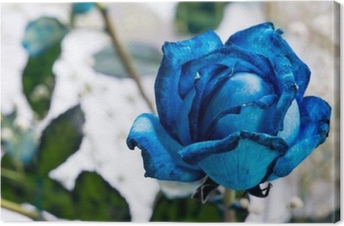 Canvas Blauwe roos
