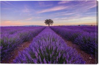 Canvas Boom op lavendelgebied bij zonsopgang in de Provence, Frankrijk