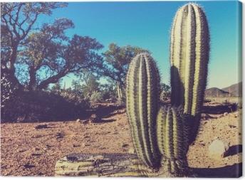 Canvas Cactus in Mexico