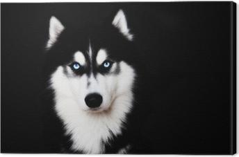 Canvas Close-up op de blauwe ogen van een hond Siberische husky