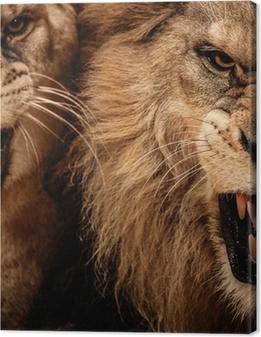 Canvas Close-up shot van twee brullende leeuw
