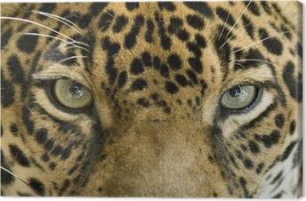 Canvas Close up van de ogen van een mooie jaguar of Panthera onca
