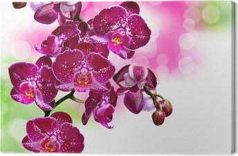 Canvas Close-up van de orchidee bloem