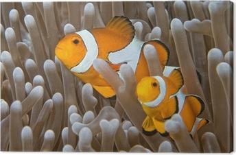 Canvas Clown vis, terwijl op zoek naar jou van anemoon