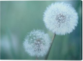Canvas Dandelions