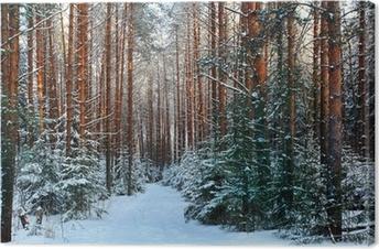 Canvas Dennenbos, de winter, sneeuw