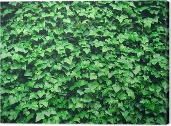 Canvas Dikke groene klimop bladeren achtergrond