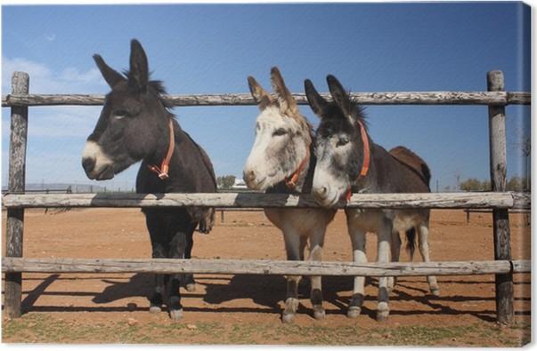 Canvas Drie ezels gluren door het hek • Pixers® - We leven om te ...