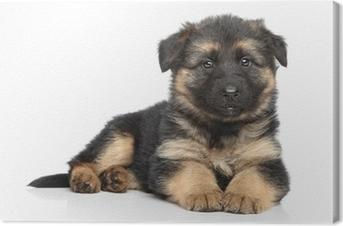 Canvas Duitse herder puppy op witte achtergrond