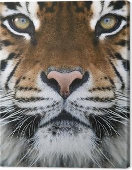 Canvas Een tijger