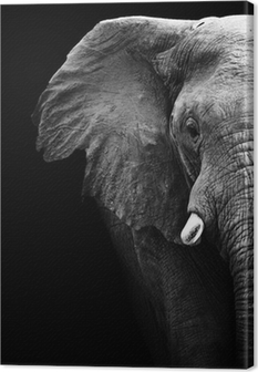 Canvas Elephant Close Up