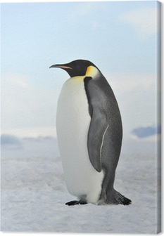 Canvas Emperor Penguin