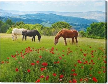 Canvas Er paarden grazen gras