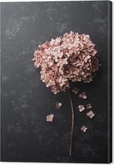 Canvas Gedroogde bloemen hortensia op zwart vintage tafel bovenaanzicht. Plat styling.