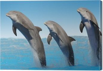 Canvas Geïsoleerde dolfijnen