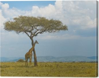 Canvas Giraffe en een boom, Masai Mara, Kenia
