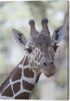 Canvas Giraffe