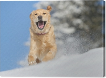 Canvas Golden Retriever in de sneeuw