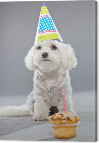 Voorkeur Canvas Grappige maltese verjaardag hond met taart en hoed. Studio  @OL-25