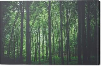 Canvas Groene bos achtergrond