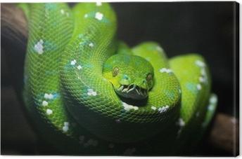 Canvas Groene slang