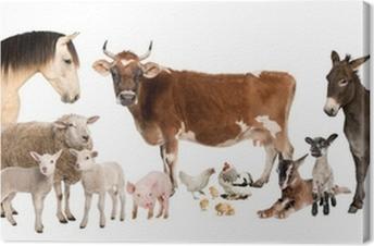 Canvas Groep van boerderijdieren: koeien, schapen, paard, ezel, kip, lam
