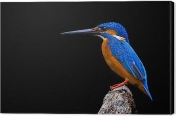 Canvas Ijsvogel