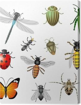 Canvas Insecten of bugs, vector collectie