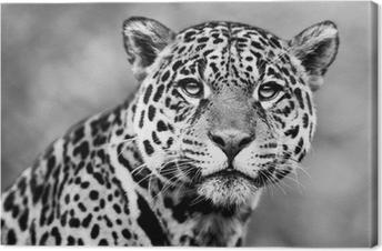 Canvas Jaguar - Panthera onca
