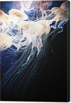 Canvas Jellyfish