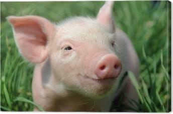 Canvas Jonge varkens op een groen gras