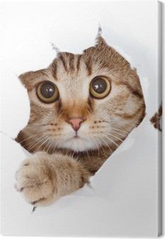 Canvas Kat te zoeken in papieren kant gescheurde gat geïsoleerd