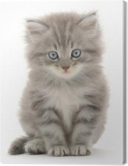 Canvas Katje op een witte achtergrond