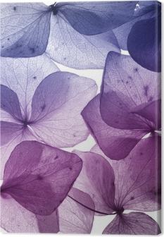 Canvas Kleurrijke bloem bloemblaadje close-up