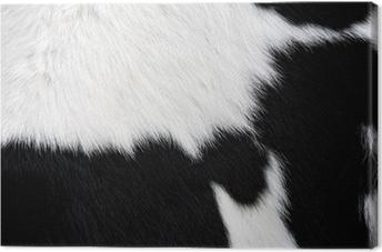 Canvas Koe bont (huid) zwart-wit, achtergrond of textuur