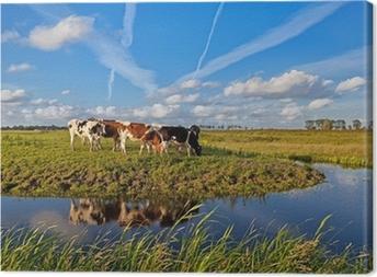 Canvas Koeien op de weide over blauwe hemel