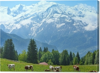 Canvas Kudde koeien op open plek en de Mont Blanc-massief uitzicht