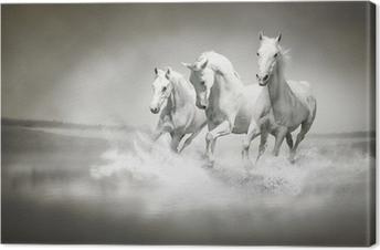Canvas Kudde witte paarden die door water